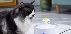 Meilleur fontaine à eau pour chat